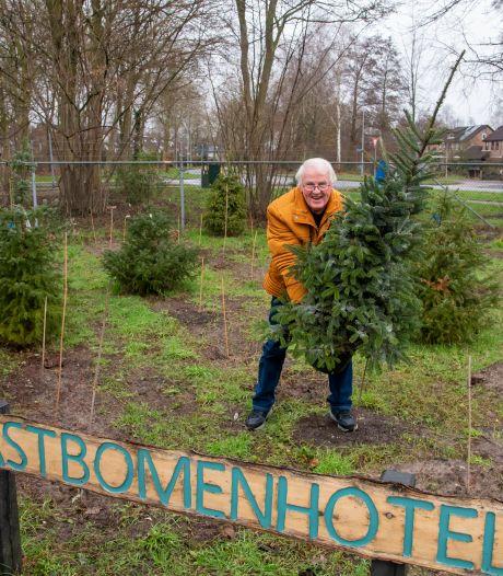 Kerstbomenhotel Harderwijk na lockdown weer open: 'Met voorzorg de boom de zomer door helpen'