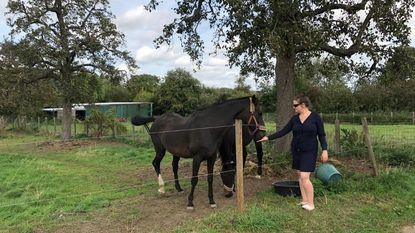 Onbekenden proberen paarden viagra te geven in weide