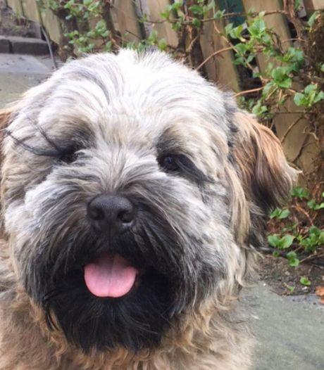 Man die hond fatale schop gaf, meldt zich bij politie