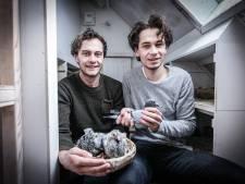 Doetinchemse gebroeders Ebbers zijn een begrip in de duivensport: 'Het is meer dan af en toe wat voer geven'
