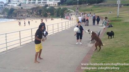 Deze Australische hond doet niet onder voor Ronaldinho of Neymar
