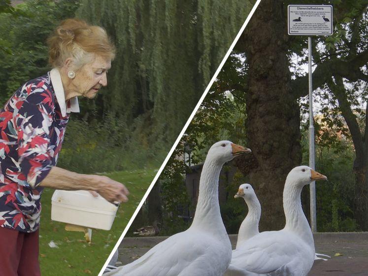 Helen (87) kookt al 30 jaar macaroni voor haar 'knuffelganzen', nu wil de gemeente dat stoppen