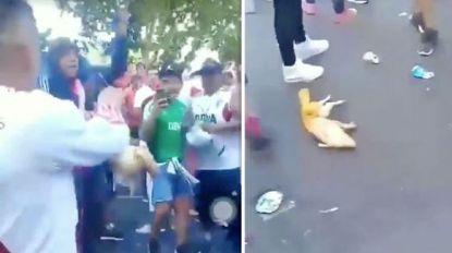 """VIDEO. """"Boca, we zullen jullie vermoorden!"""": River Plate-fans schoppen varken en katapulteren het metershoog de lucht in"""
