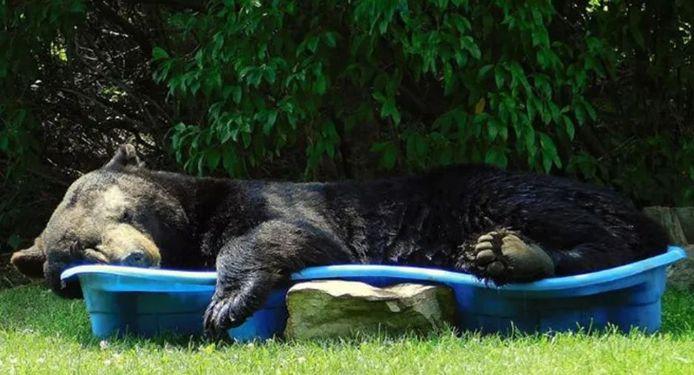 Le 19 juillet dernier, Regina était en train d'arroser ses plantes dans son jardin quand un ours est apparu.