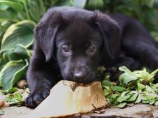 Verbazing over hondenbeleid: 'Slechts acht controles?'