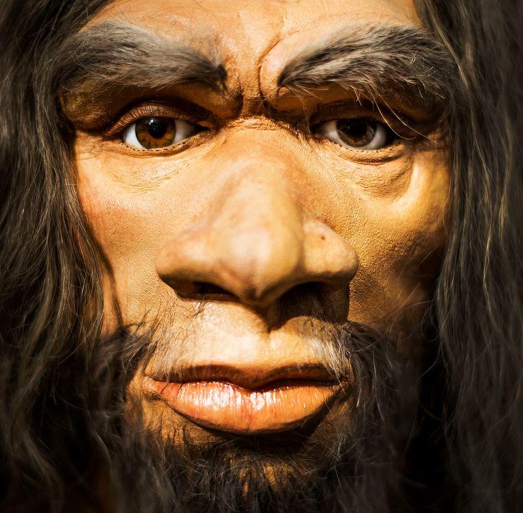 Een nagemaakte Neanderthaler maakt deel uit van Giants of the Ice Age in Amsterdam Expo, de grootste reizende tentoonstelling over de ijstijd ooit die is opgebouwd.  Beeld null