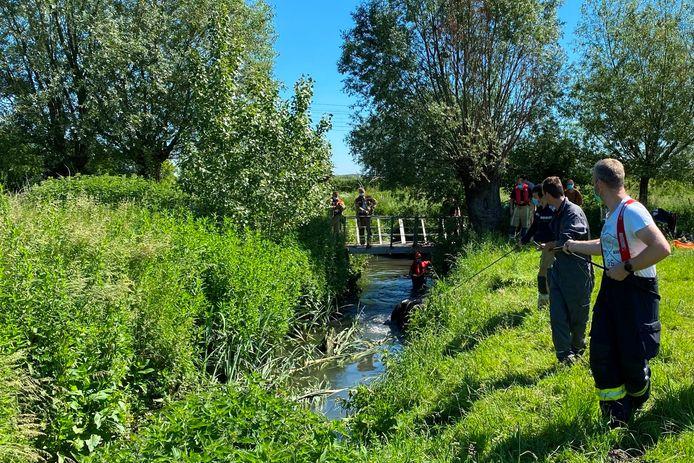 Stier Juleke kwam vast te zitten in de gracht ter hoogte van het brugje van Ossenbroeck tussen Oordegem en Westrem.