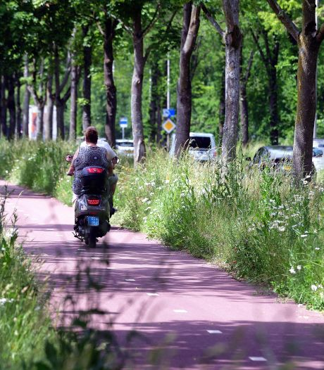 Bijna verdubbeling klachten over nieuw maaibeleid in Steenbergen: 'Loopt niet altijd soepel'