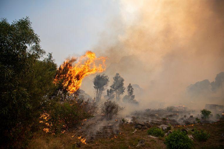 Het vuur aan de voet van de Tafelberg is naar verluidt aangestoken door een dakloze. De wind deed de rest. Beeld AP