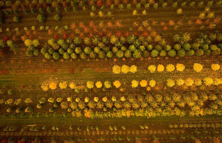 Een luchtfoto gemaakt met een drone in Knutsford, England.  Beeld Getty Images