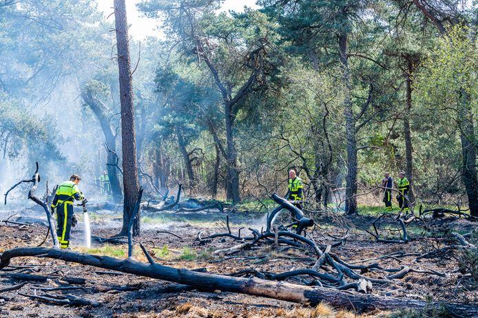 Brand in bossen bij Tilburg