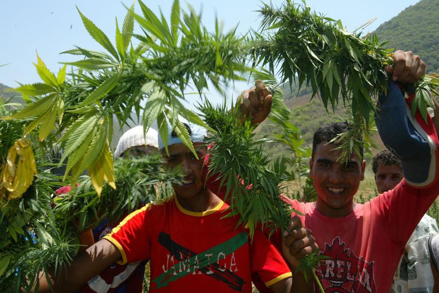 Marokkanen helpen bij de vernietiging van een wietplantage in het Rifgebergte