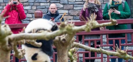Een dagje naar de dierentuin alsof alles weer 'normaal' is: in het Ouwehands kan het (en zo ziet dat eruit)