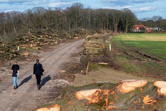 Wolfheze, 23 februari 2021. Bomenkap bij de Boshoeve 3, met op de achtergrond rechts De Boschhoeve -kwekerij, tuin en theeschenkerij. dgfoto. Foto: Gerard Burgers