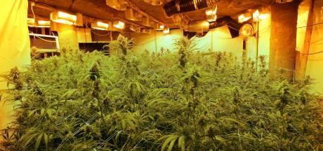 Nieuwe aanpak drugscriminelen werpt vruchten af: vijf kwekerijen en twee drugspanden opgerold in 2020