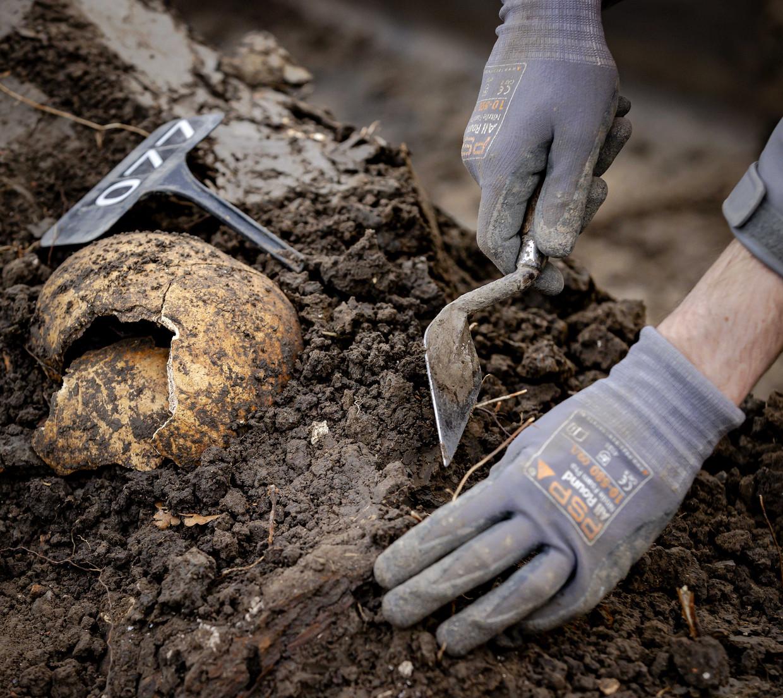 Archeologen aan het werk bij een massagraf aan de stadsgracht in Vianen. Beeld ANP