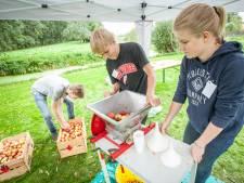 Vrijwilligers plukken 5000 kilo fruit (!) voor Hoekschewaards appelsap