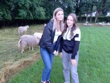 Noa (14) en Isa (13) uit Groesbeek redden bekneld schaap uit houten schutting
