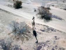WNF luidt alarmbel: populaties diersoorten sinds 1970 met tweederde afgenomen