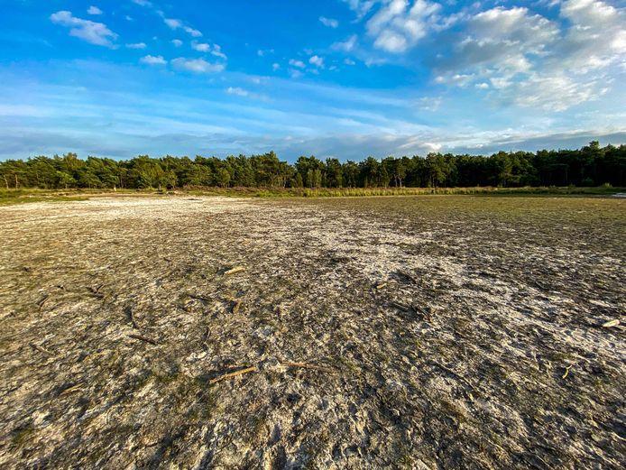 De Putse Moer op de Kalmthoutse Heide, 's winters een populaire schaatsplaats, staat volledig droog.