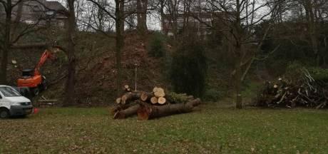 Arnhem doet aangifte van illegale kap van eeuwenoude bomen op stuwwal Onderlangs