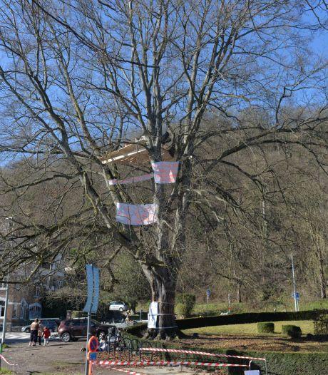 Des activistes perchés dans un arbre du casino de Namur