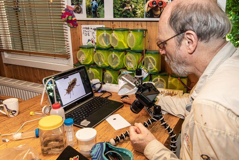 Spinnendeskundige Peter Koomen fotografeert gevonden insecten. Beeld Dingena Mol