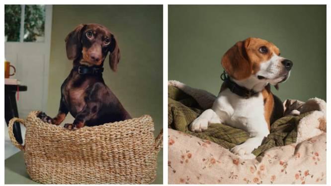 Zara Home lanceert smaakvolle oplossing voor lelijk dierenspeelgoed