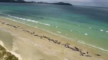 """145 grienden aangespoeld op afgelegen strand in Nieuw-Zeeland: """"Zeer triest"""""""