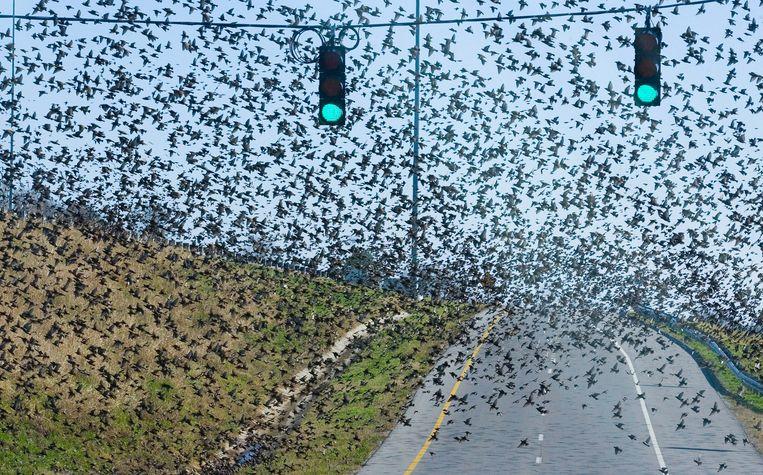Volgens de onderzoekers zouden er ongeveer zes keer zoveel vogels als mensen op de wereld leven.   Beeld AP