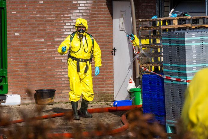Pluimveebedrijf Sonseheideweg Sint Oedenrode beset met vogelgriep