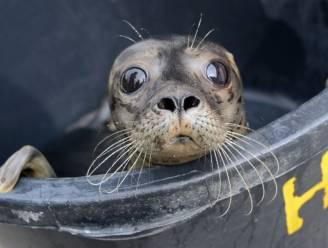 Sea Life vangt eerste zomerpup op