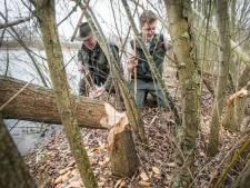 Bever zwemt verder West-Brabant in: 'In Breda zit nu een stelletje'
