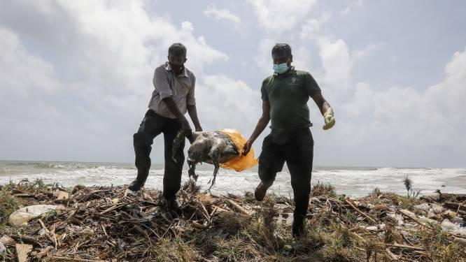 Al bijna honderd dode schildpadden aangespoeld na scheepsramp voor kust van Sri Lanka