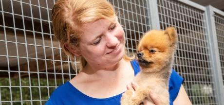 Er komen steeds meer dierenpensions bij en dat is nodig ook: 'Het is heel druk'