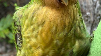 Nieuw-Zeeland redt zijn nationaal symbool van uitsterven
