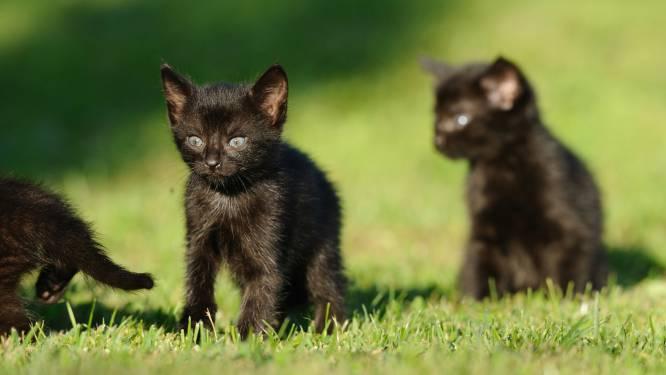 Zoektocht naar vermiste kittens eindigt in nachtmerrie
