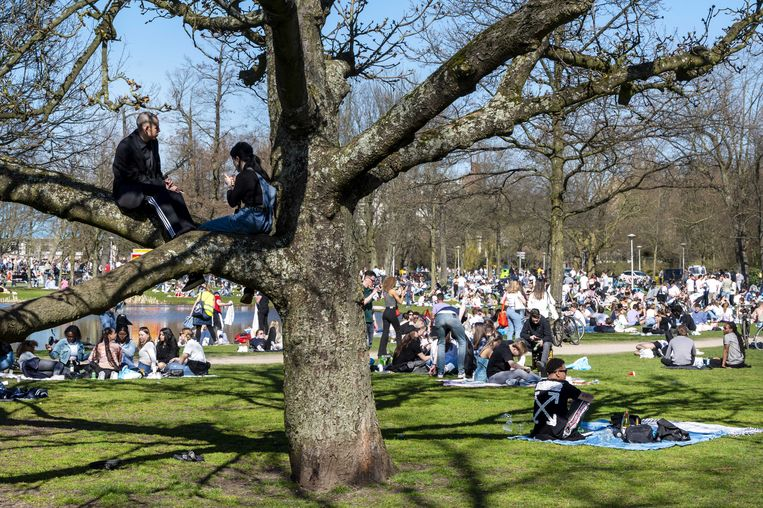 Drukte en gezelligheid in het Vondelpark, eind maart.  Beeld ANP