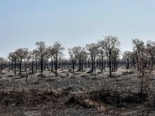 La déforestation de l'Amazonie a presque doublé sur un an