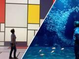 Deze nieuwe Rotterdamse attractie laat je ogen rollen