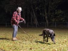 Einde dreigt na zestig jaar voor ruziënde Hulshorster hondenclub: gemeente Nunspeet zegt huur op