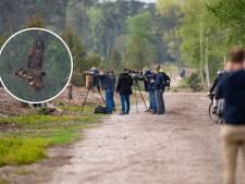 Vogelspotters trekken naar Archemerberg om glimp van bijzonder Lammergier op te vangen: 'Geeft een enorme kick'