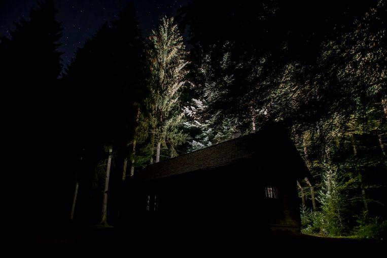 Massimo Furlan: 'Als levende organismen staan bomen dichter bij ons dan we denken.' Beeld Pierre Nydegger