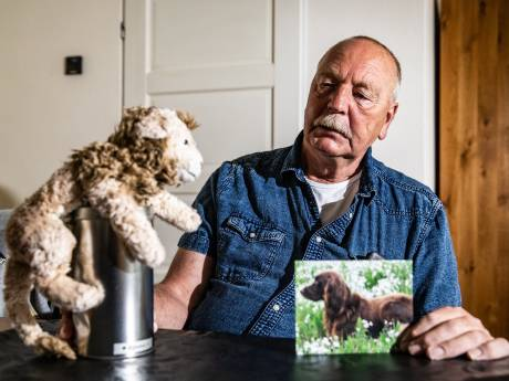 Bulldog die hond Bashshar in Deventer doodbeet maakte al eerder slachtoffer: 'Ik ben nog steeds bang'