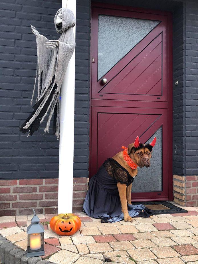 Ook bij Halloween kreeg Isa even een aangepast kostuumpje