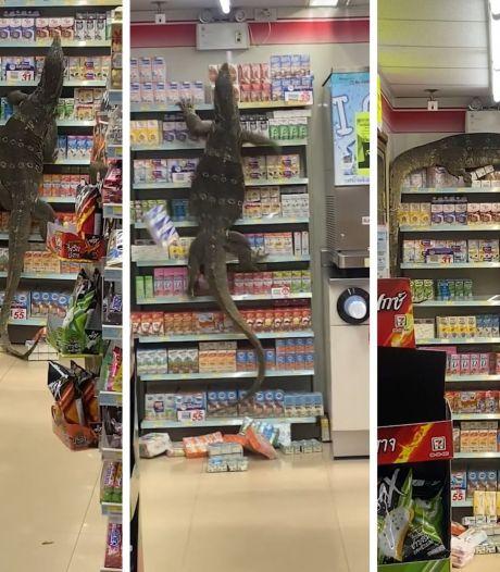 Un lézard géant grimpe sur les étagères d'un magasin à la recherche de nourriture