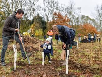 Tweede geboortebos in Kapellen: 630 bomen voor kinderen geboren in 2013 en 2014