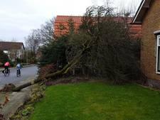 Wageningers krijgen voor tweede keer boom op huis