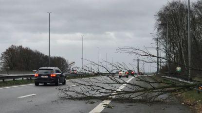 Storm Ciara zorgt voor omgewaaide bomen, afgezette straten en loshangende kabels van verlichtingspalen