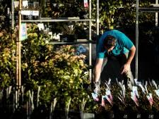 Tuincentrum heeft stunt: klanten krijgen gratis planten in ruil voor stoeptegel